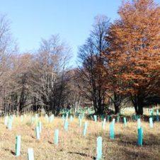 Imagen de la Nota: P&G Chile se suma al trabajo de Fundación Reforestemos para ayudar en la conservación de los bosques en la Patagonia