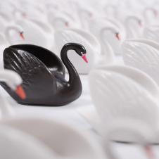 Imagen de la Nota: El otro cisne negro